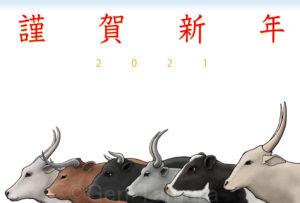 年賀状 2021年 丑年 PIXTA / Adobe Stock / Shutterstock イラスト : タムラゲン ( タムラ・ゲン )